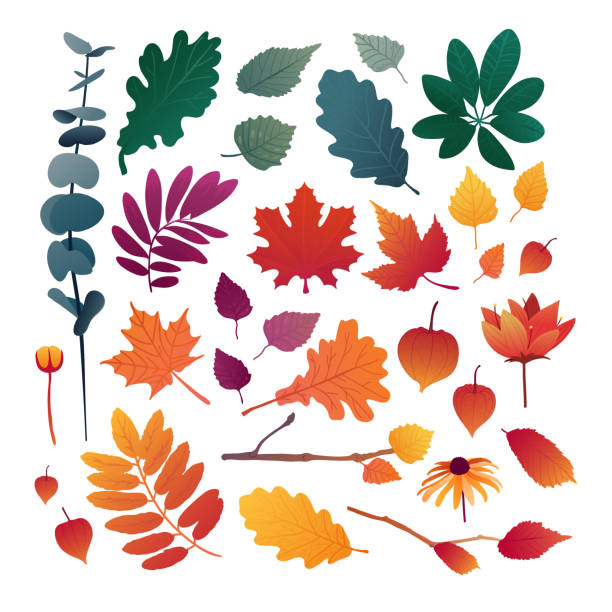 Set of autumn leaves. Design elements of red color for the autumn season. Silhouettes of maple leaf, oak leaf, sea buckthorn and physalis. Organically natural branches and plants. Vector. Set of autumn leaves. Design elements of red color for the autumn season. Silhouettes of maple leaf, oak leaf, sea buckthorn and physalis. Organically natural branches and plants. Vector exodus stock illustrations