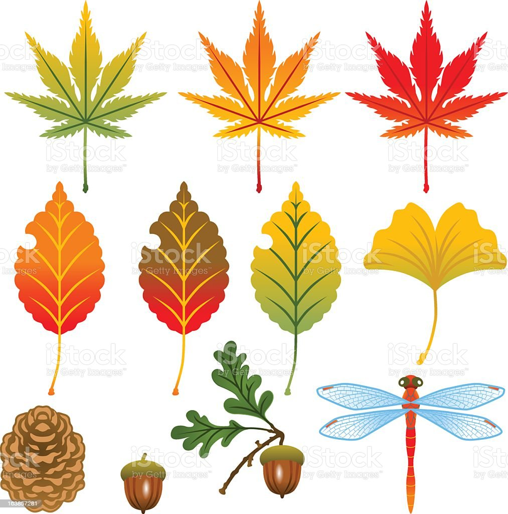 Set of autumn leaves, fruits and insects royalty-free set of autumn leaves fruits and insects stock vector art & more images of acorn