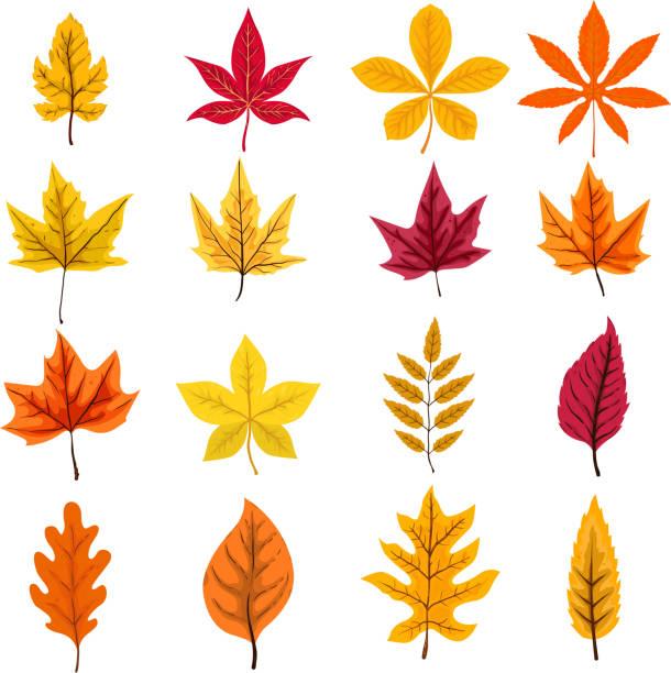 Satz von Herbstlaub isoliert auf weißem Hintergrund. Vektor-Design-element – Vektorgrafik
