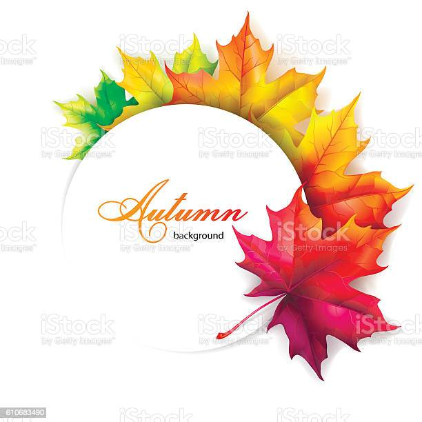 Set of autumn leaves of maple vector id610683490?b=1&k=6&m=610683490&s=612x612&h=02frhcdjh0mcpj xgstl3vrwa8mio ztanldhtwpmcs=