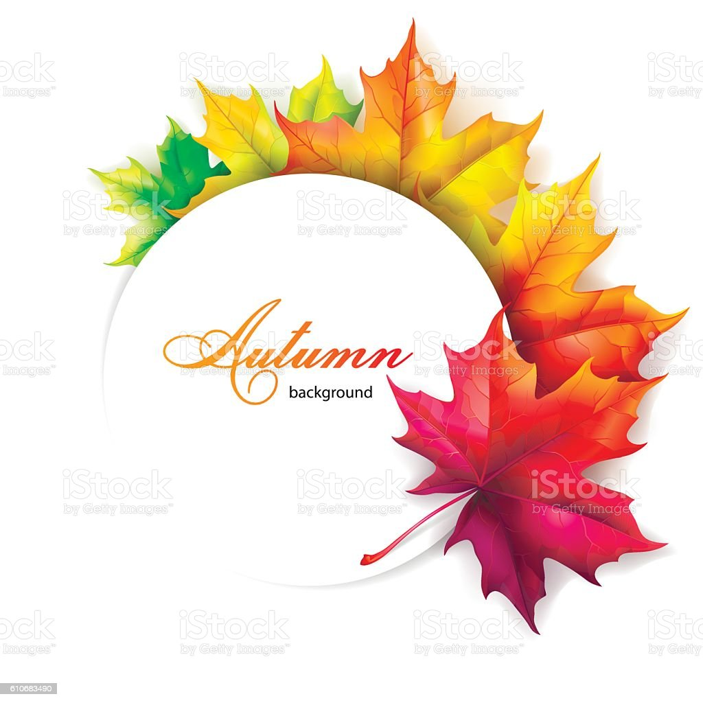 Set of autumn leaves of maple. vector art illustration