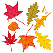 Set of Autumn Leaves. Vector illustration.