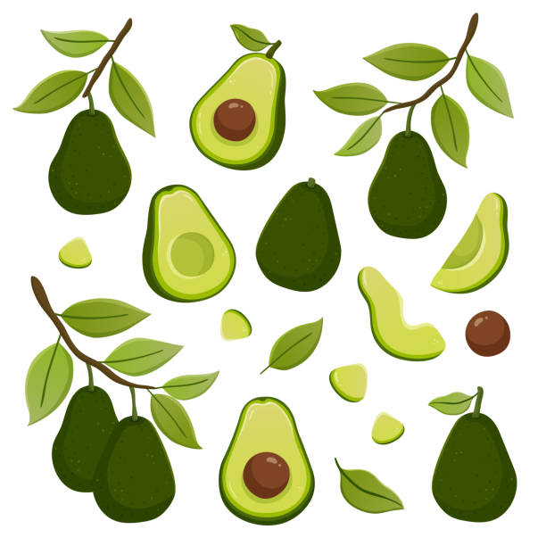illustrazioni stock, clip art, cartoni animati e icone di tendenza di set of avocado illustrations - avocado