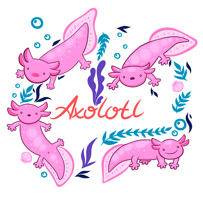Set of axolotl isolate on a white background. Vector graphics.