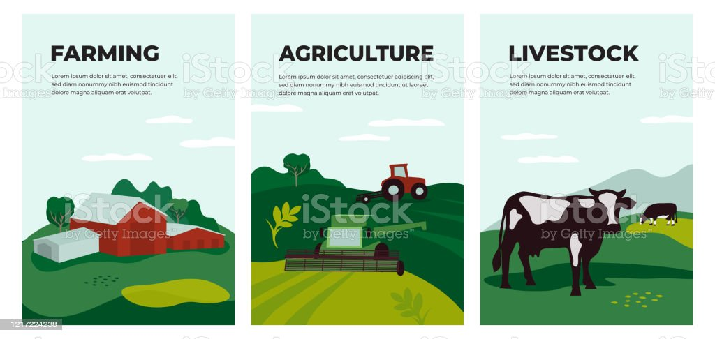 Set Of Banners With Agriculture Farming And Livestock Illustration Stock Illustration Download Image Now Istock