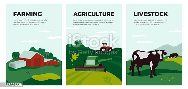 Vector illustrations of agriculture, farming and livestock. Posters with farmland landscape, tractor plows on field, agricultural building, cow in pasture. Template for banner, flyer, cover, brochure.