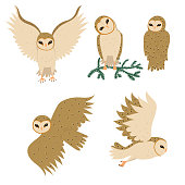 Set of barn Owls isolated on a white background. Vector graphics.