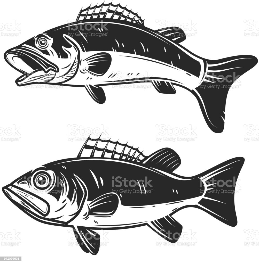 Set of bass fish illustrations isolated on white background. Design elements for  label, emblem, sign. vector art illustration