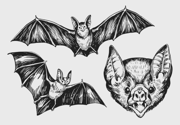 set of bat. hand drawn sketch converted to vector. - bat stock illustrations, clip art, cartoons, & icons