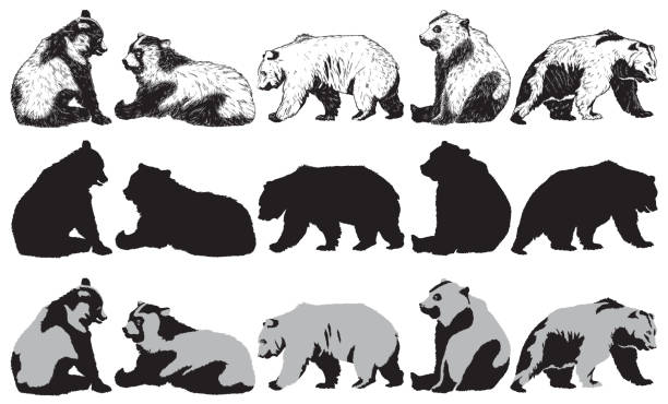 set of bear on a white background - bear stock illustrations, clip art, cartoons, & icons