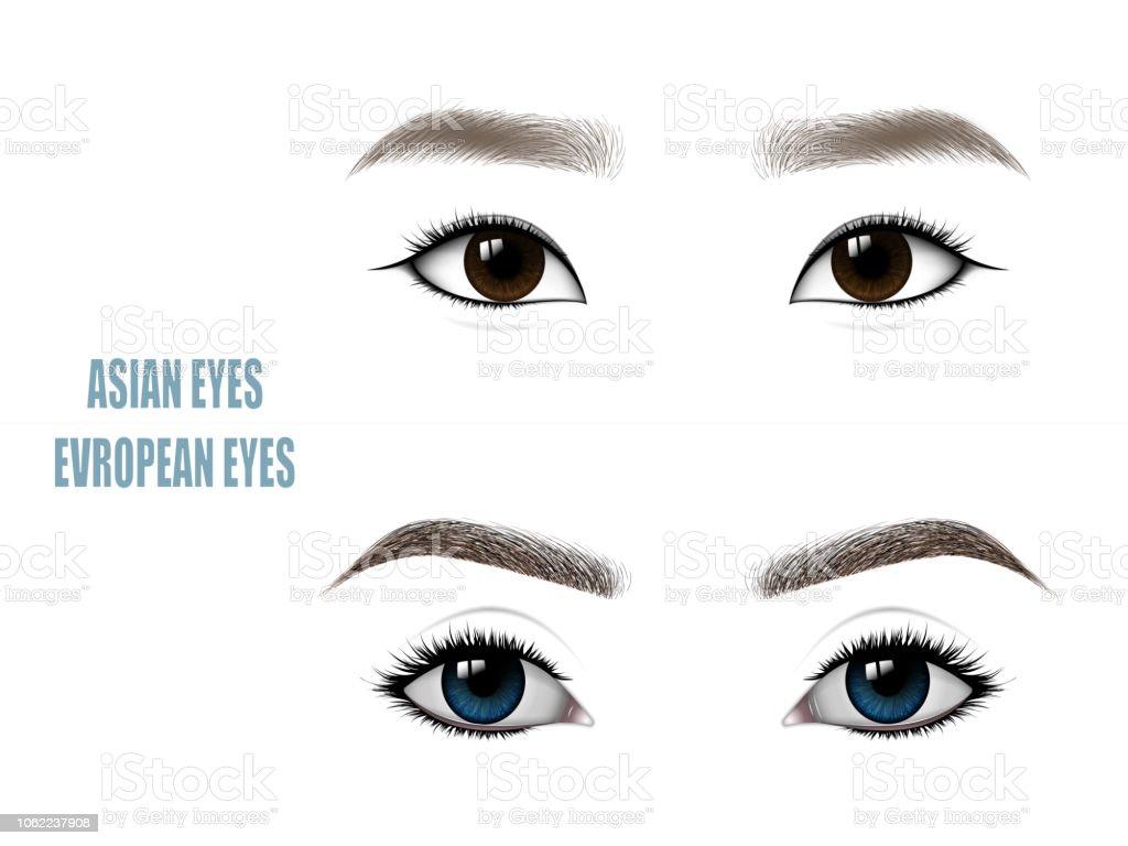Satz Von Schöne Asiatische Und Europäische Frau Augen Und Brauen Stock  Vektor Art und mehr Bilder von Auge