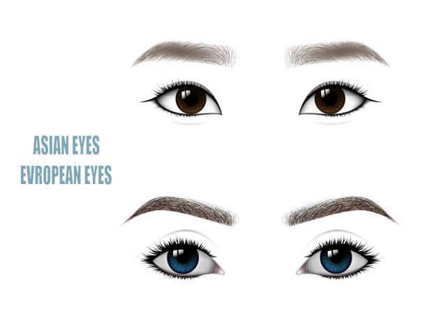 ilustraciones, imágenes clip art, dibujos animados e iconos de stock de conjunto de hermosa mujer asiática y europea de ojos y cejas. - asian woman