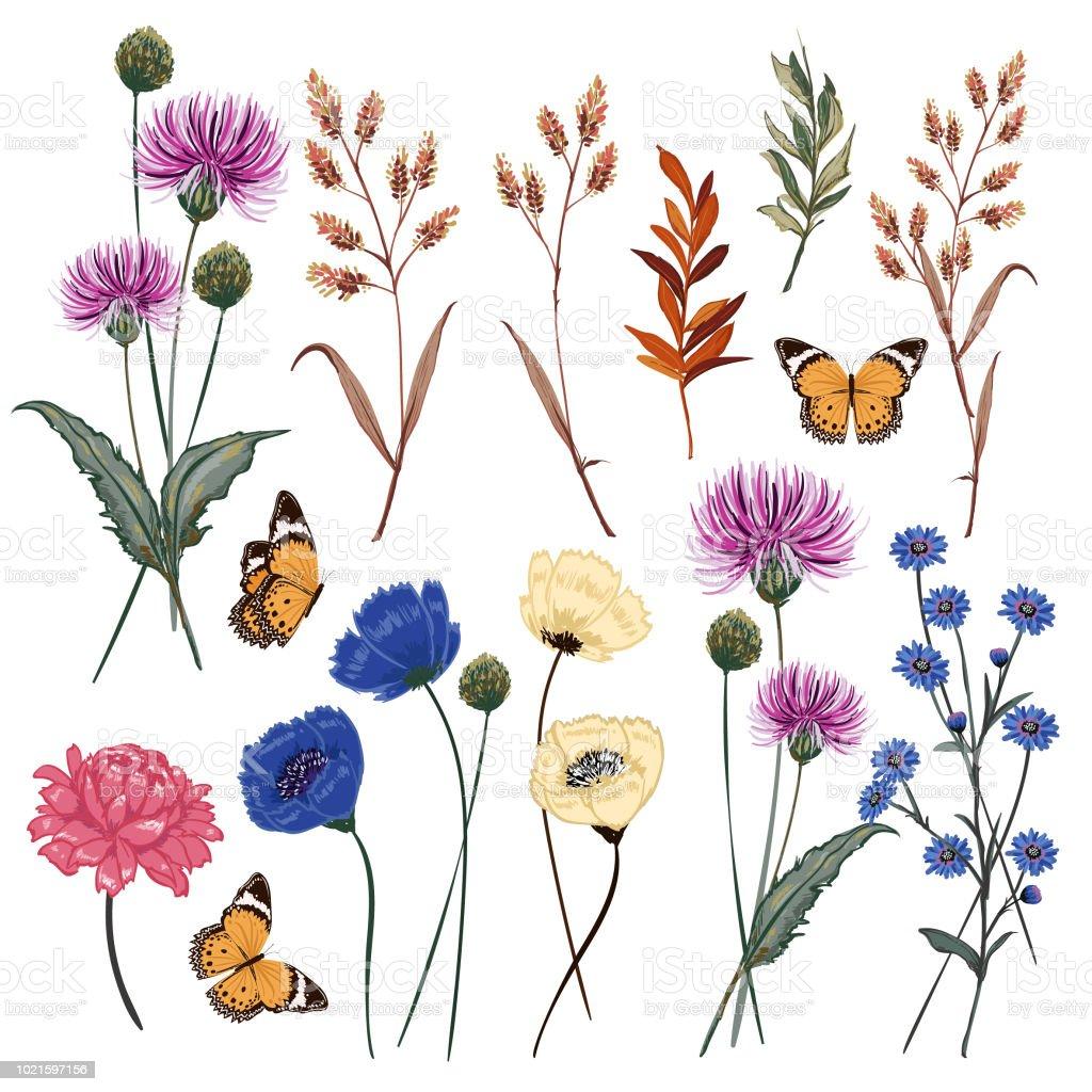Conjunto de medow botánico hermosa ilustración de vector de flor con mariposa flor floral - ilustración de arte vectorial