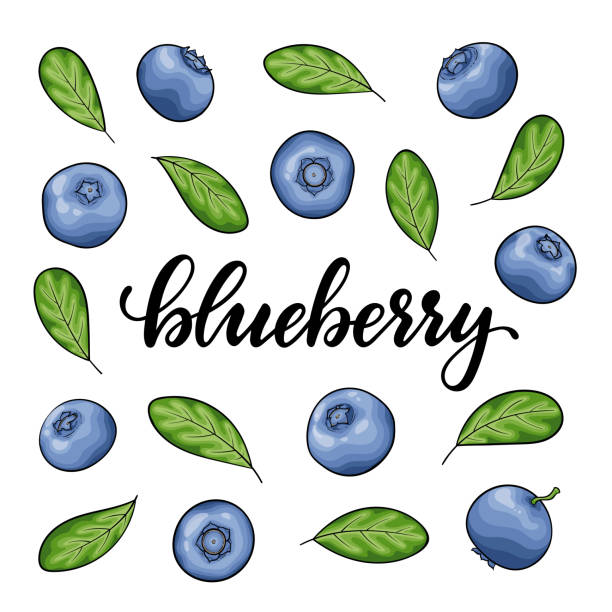 set of Beautiful cartoon blueberry with black contour, symbol of summer. design for holiday greeting card and invitation of seasonal summer holidays, beach parties, tourism and travel Set of Beautiful cartoon blueberry with black contour, symbol of summer. design for holiday greeting card and invitation of seasonal summer holidays, beach parties, tourism and travel. bil stock illustrations