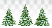 Firs. set of beautiful Christmas trees in the snow. Christmas. Winter. Nature in details. Drawing. Vector. Eps 10. Isolated on a transparent background.