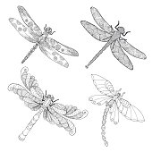 Set of beautiful dragonflys.
