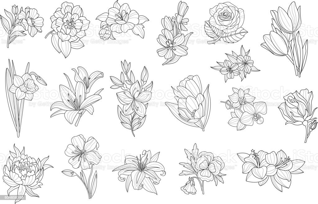 Set Of Beautiful Monochrome Flowers Lily Tulip Peony Rose Daffodil