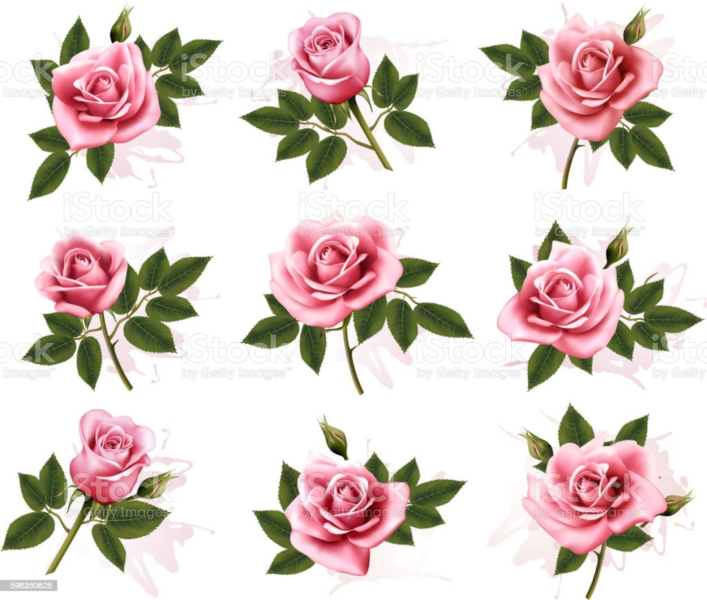 Set of beautiful pink roses. Vector. royalty-free set of beautiful pink roses vector stock vector art & more images of abstract