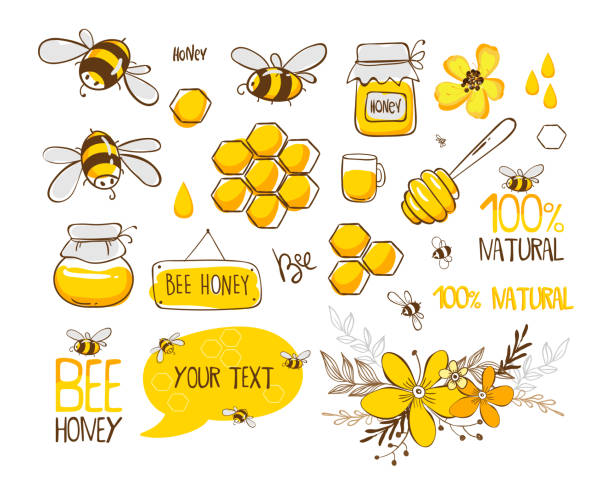 illustrazioni stock, clip art, cartoni animati e icone di tendenza di set of bee, honey, lettering and other beekeeping illustration. vector eps10 - miele