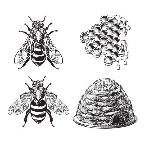 Set von Biene, Wespe, Waben, Bienenstock Vintage Zeichnung – Vektorgrafik