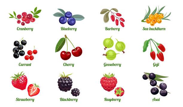 illustrazioni stock, clip art, cartoni animati e icone di tendenza di set di bacche isolate su sfondo bianco. lampone, mora, fragola, uva spina, ciliegia, ribes, olivello spinoso, mirtillo, mirtillo rosso, acai, goji, barberry. illustrazione piatta vettoriale. - mirtilli