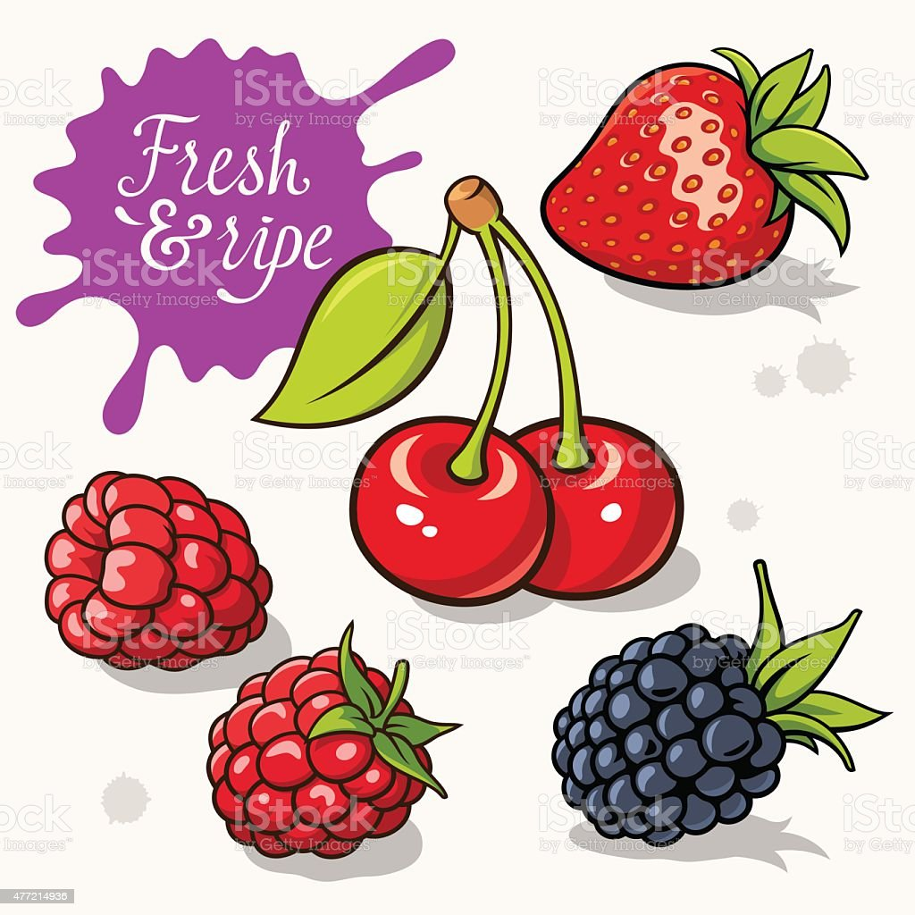 Set of berries vector art illustration