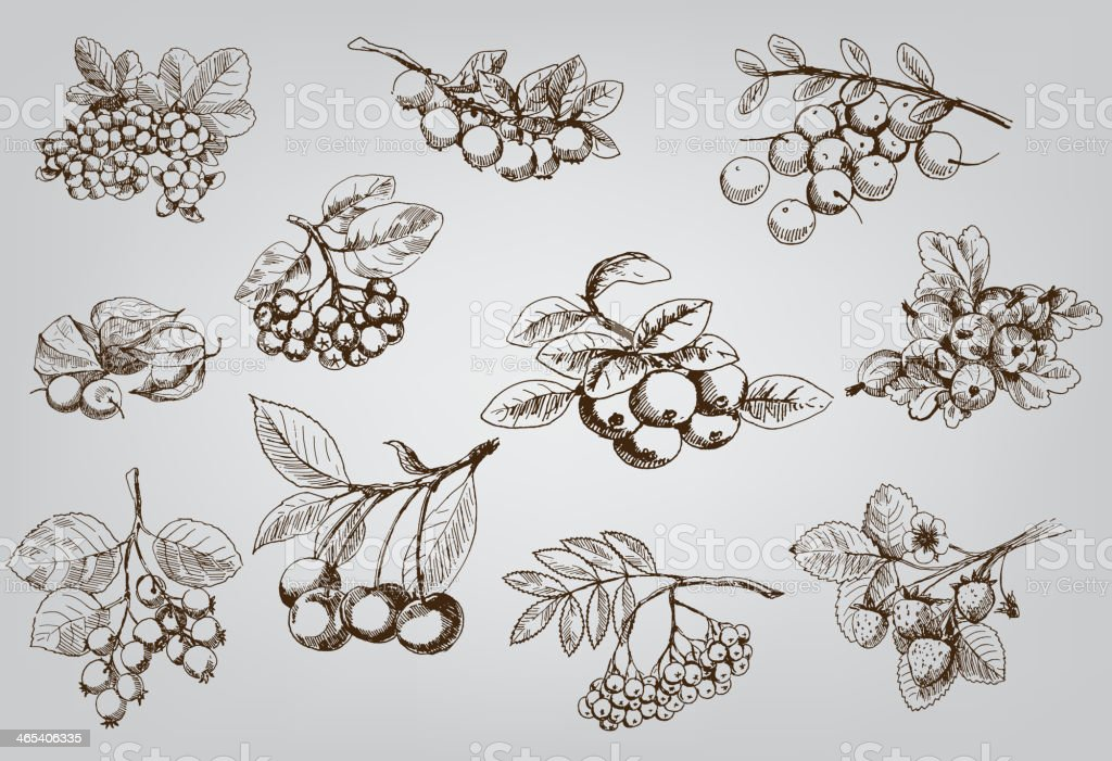 set of berry royalty-free stock vector art