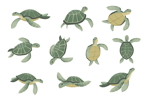 Set of big green sea turtle cartoon cute animal design ocean tortoise swimming in water flat vector illustration isolated on white background
