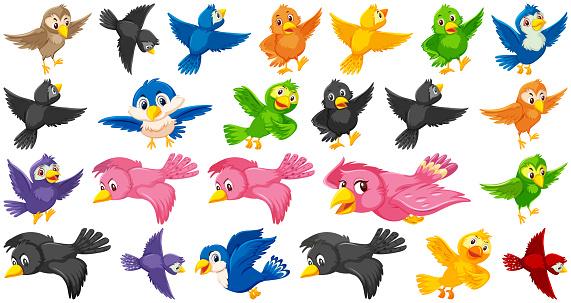 Set of bird cartoon character