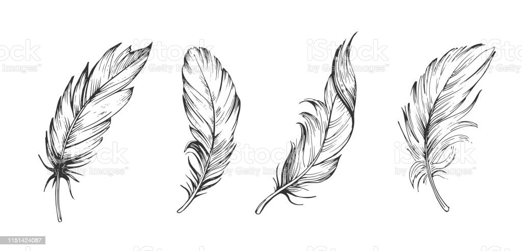 Set Of Bird Feathers Hand Drawn Illustration Converted To Vector Outline With Transparent Background Stock Illustration Download Image Now Istock Owl feather tattoo outline new feather owl bird flowers designs tattoo. set of bird feathers hand drawn illustration converted to vector outline with transparent background stock illustration download image now istock