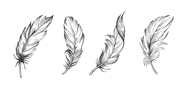 Set of bird feathers. Hand drawn illustration converted to vector. Outline with transparent background