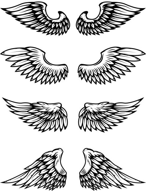 Set of bird wings isolated on white background. vector art illustration
