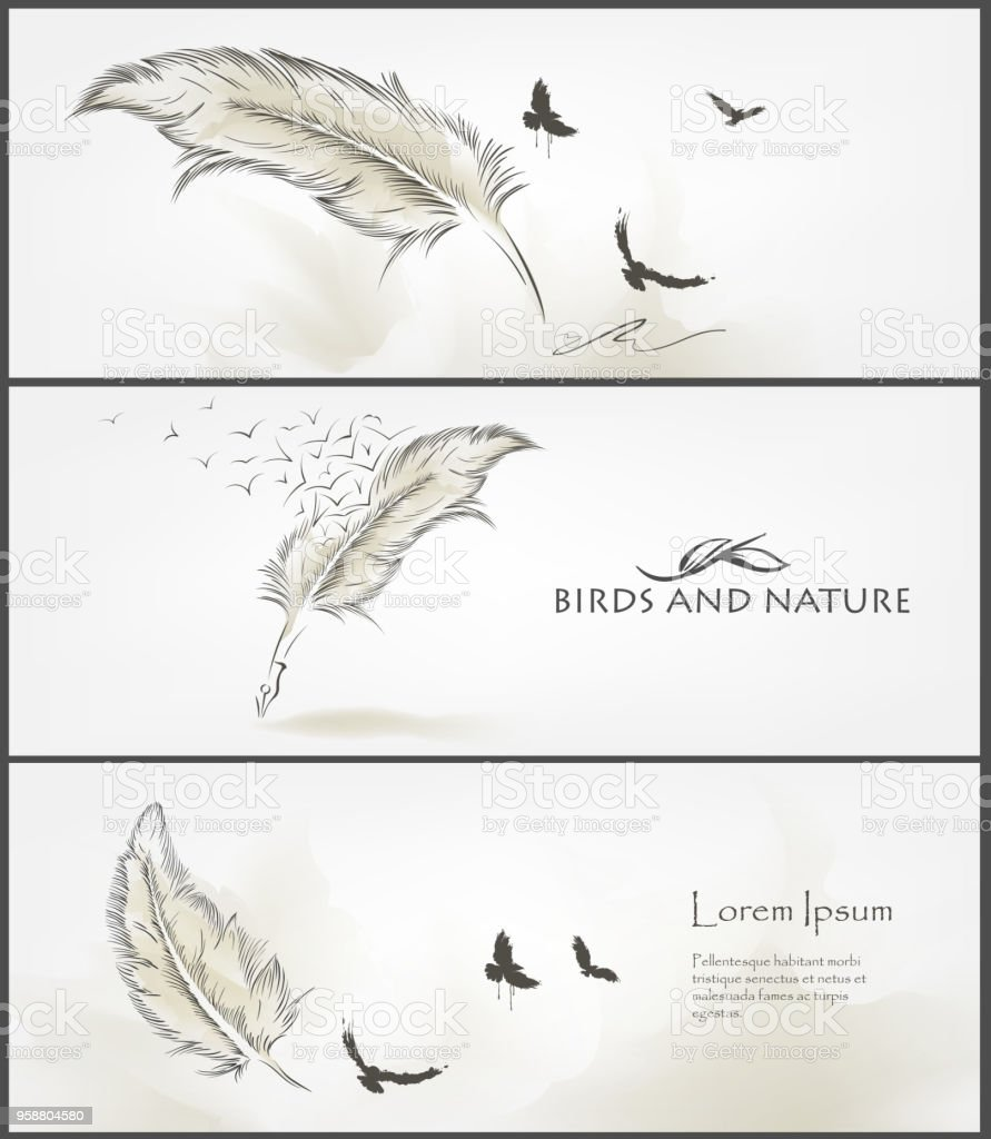 Set Of Birds And Feather Banner For Facebook Poster Vector Design