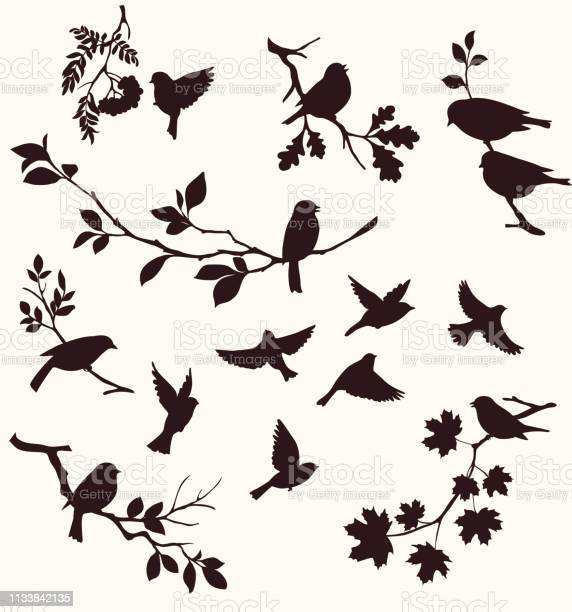 Set of birds and twigs decorative silhouette of birds sitting on tree vector id1133842135?b=1&k=6&m=1133842135&s=612x612&h=9ox8ilw2qf0t8no6qbyi0dcvgxwtindoemek9 shw q=