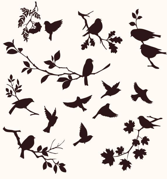 zestaw ptaków i gałązek.  dekoracyjna sylwetka ptaków siedzących na gałęziach drzew: dębu, klonu, brzozy, jarzębiny i innych. latające ptaki - gałąź część rośliny stock illustrations