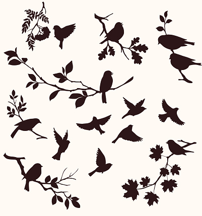 bird silhouettes stock illustrations