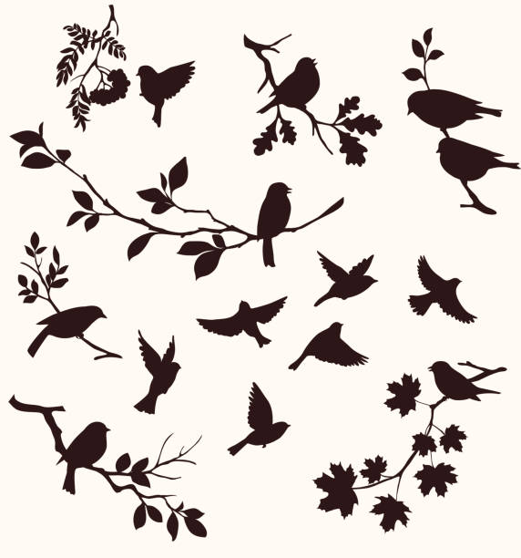 set of birds and twigs.  decorative silhouette of  birds sitting on tree branches: oak, maple, birch, rowan and others. flying birds - birds stock illustrations