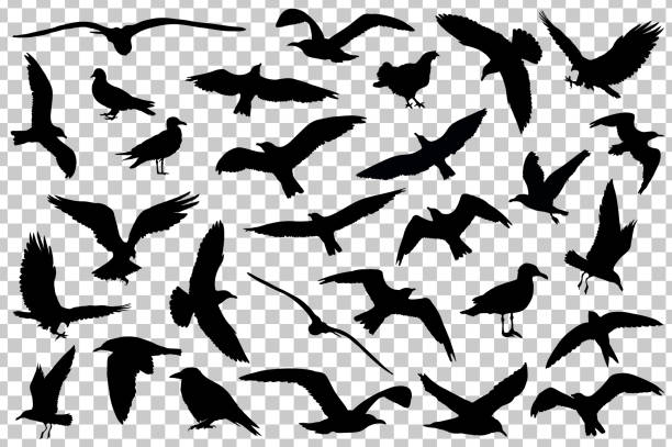 Set of birds silhouettes isolated. Vector illustration vector art illustration