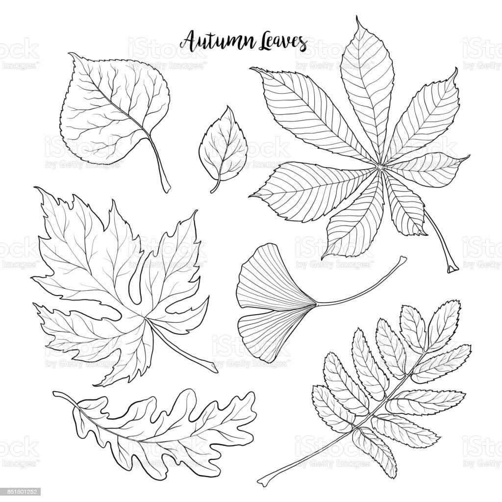 Set of black and white autumn falling leaves vector art illustration