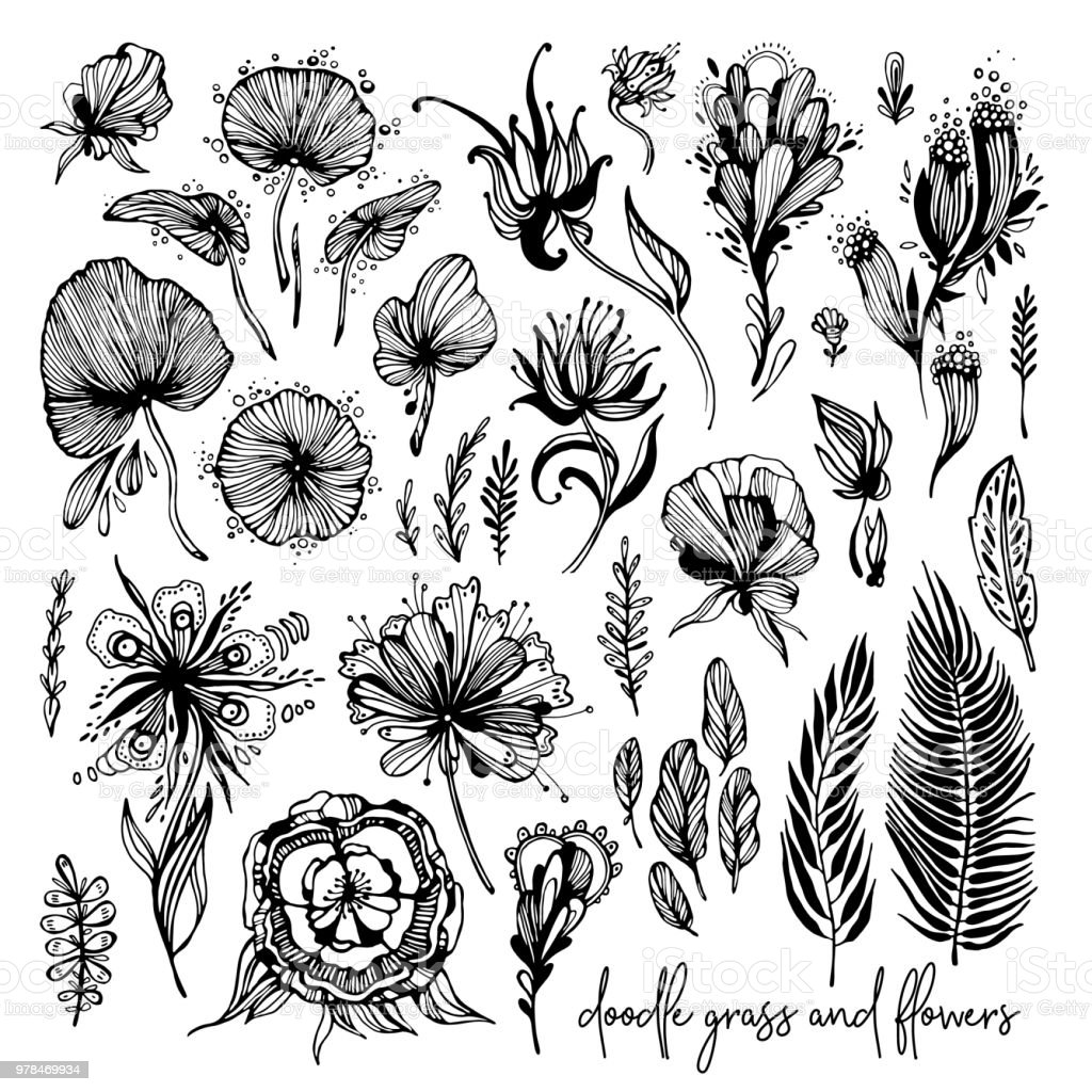 Set of black and white exotic flowers stock illustration download