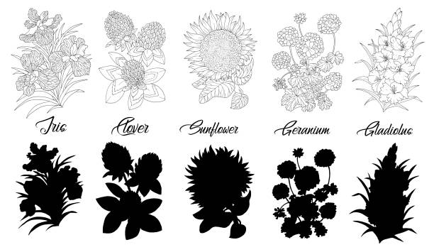 Set of black and white outline flowers - iris, clover, sunflower, geranium, gladiolus. vector art illustration