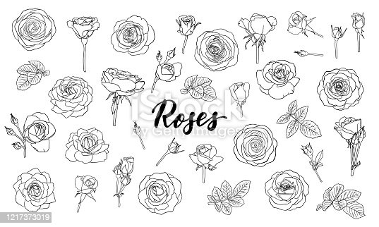 set of black and white outline roses, buds and leaves. Floral contour isolated on white background. design greeting card and invitation of the wedding, birthday, Valentine Day, mother s day, holiday