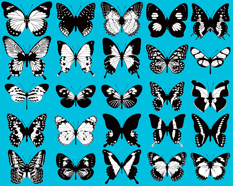 Set of black and white, vector butterflies on blue background