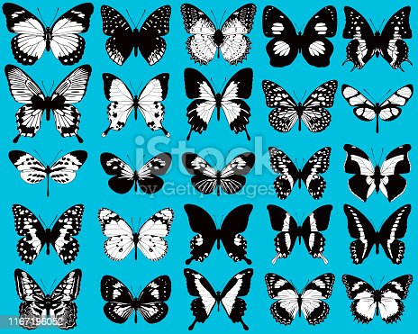 istock Set of black and white, vector butterflies on blue background 1167196052