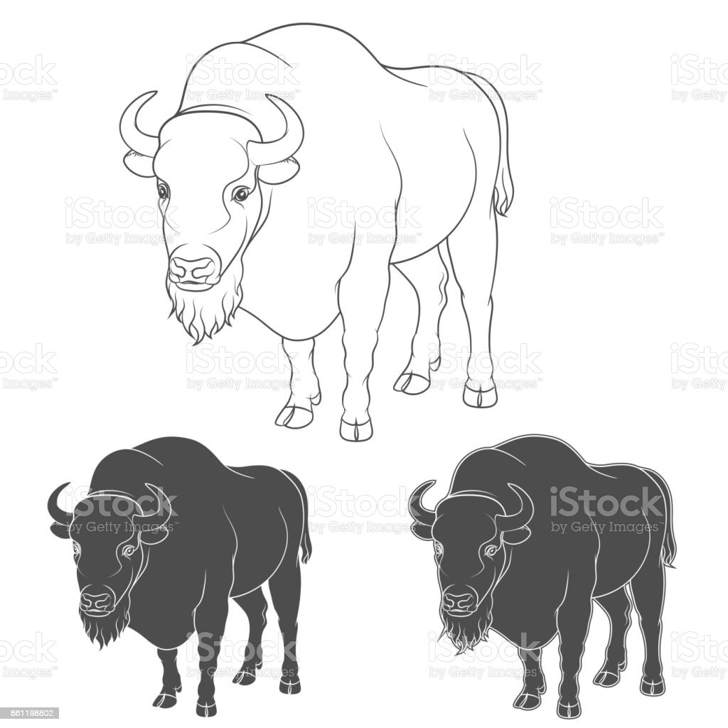 royalty free oxen clip art vector images illustrations istock rh istockphoto com oxen clipart free Big Blue Ox Clip Art