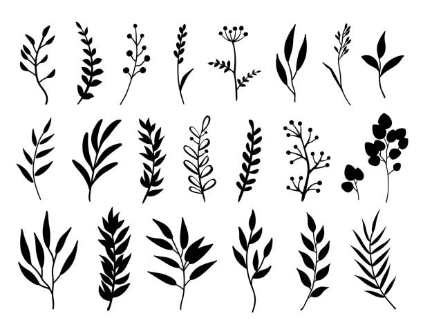 set of black branches and herbs - vine stock illustrations, clip art, cartoons, & icons
