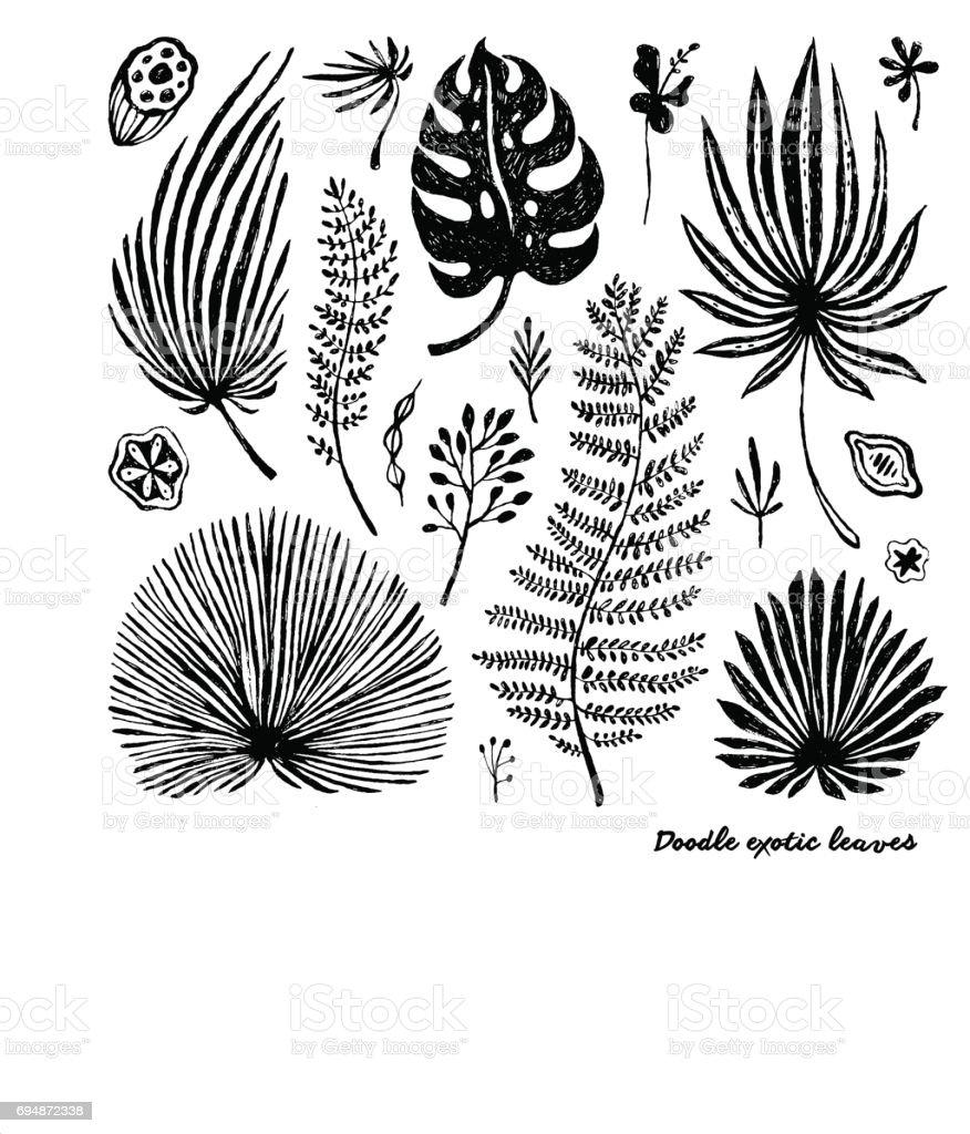 Set of black doodle exotic, banana leaves on a white background.