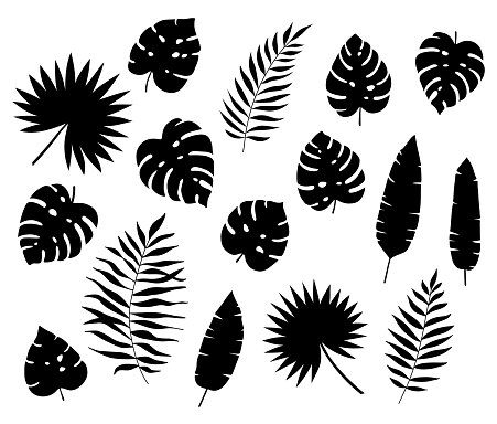 Set of black exotic tropical leaves. Silhouettes of tropical leaves - coconut, Monstera Deliciosa, fan palms, fern, banana. Hand drawn vector elements Isolated on white background. Flat style.