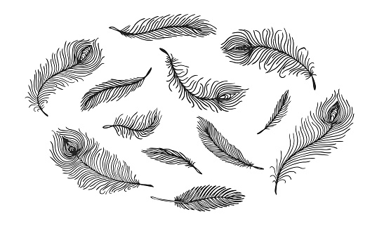 Set of black hand drawn different Peacock feather on white background. Vector illustration