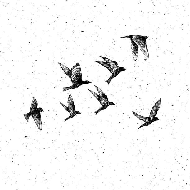 illustrations, cliparts, dessins animés et icônes de multitude d'oiseaux de traits dessinés à la main noire, troupeau. esquisse de dessin. en texture abstraite texture granuleuse de poussières de tache comme au pointillé. encre de tatouage flash corps source d'inspiration.  vector. - tatouages d'oiseaux